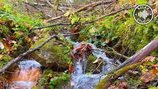 Расслабляющие Звуки Лесного Ручья. Живые Звуки Природы в 4К.