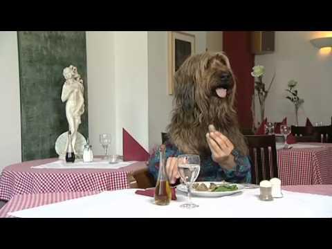 hund isst nen gem sebratling simme vom perfekten dinner youtube. Black Bedroom Furniture Sets. Home Design Ideas