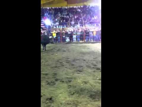 Mayuto vz el gallito en Chiltepec campeón torneo de precide
