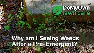 Why Am I Seeing Weeds After a Pre-Emergent? - Weed Control Tips