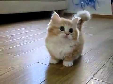 няшный котик