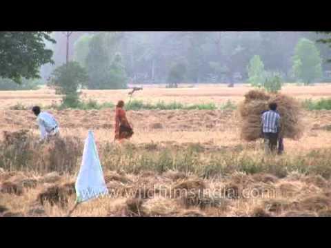 Indian farmland