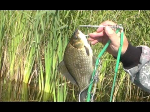 Ловля карася на мормышку весной Catching carp fishing tackle for ...
