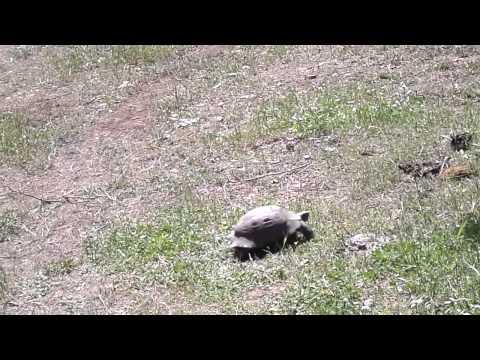 Черепаха » Приколы на XA-: Тысячи фото, картинки