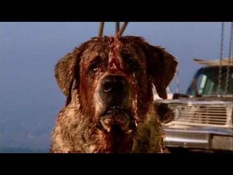 Cujo is listed (or ranked) 3 on the list The Scariest Animal Movies Ever Made