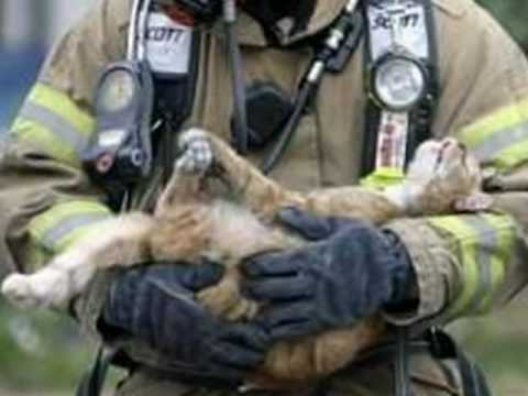 Firefighters Rescue Cats