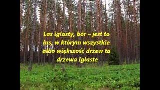 Lasy iglaste - Film na lekcję przyrody [PL]