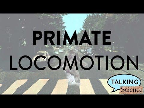 Primate Locomotion!