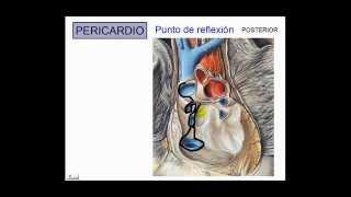 Anatomía del corazón COMPLETO - Dr. Leonardo Coscarelli.