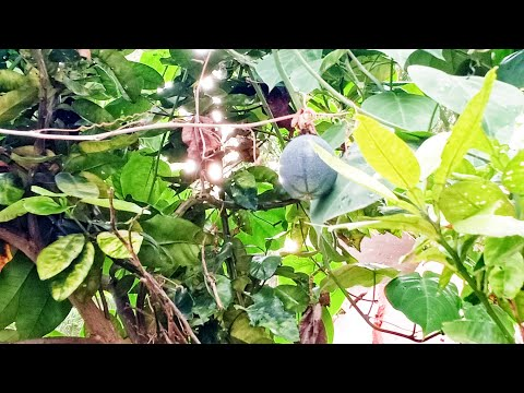 BACKYARD GARDENING in the CITY, stay at home vlogs this ECQ