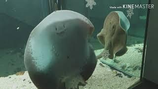 Deajeon Aquarium, Korea. 대전 아쿠…