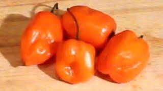 Habanero Pineapple Mango Salsa - Super Hot & Sweet