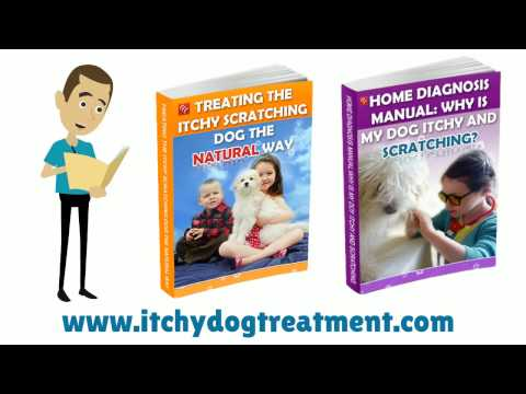 dog-allergies-and-how-to-stop-the-itchy-dog-itching-and-chewing-its-feet