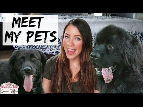MEET MY PETS | Pet Tag 2018