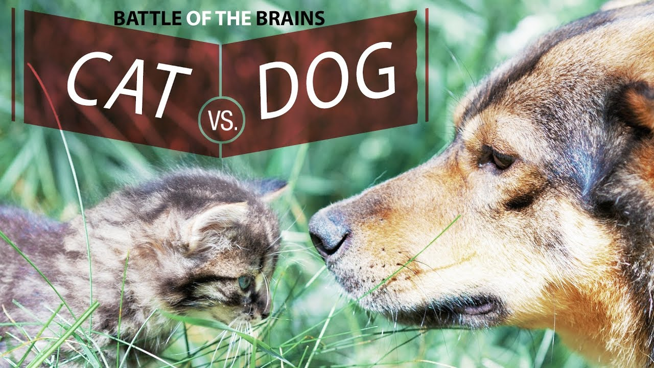 Dogs are definitely brainier than cats, new study suggests