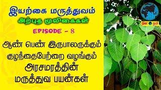 Arasamaram | அரசமரம் | குழந்தைபேறு | Siddha | Nattu | Iyarkai | Peepal Tree | Ficus Religiosa