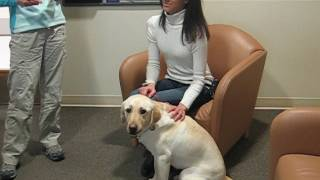 The beautiful moment when I first met my guide dog Antonia at Guide Dogs for the Blind 2009