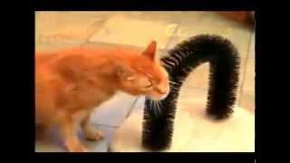 Когтеточка со щеткой «Кошачье Удовольстве» Purrfect Arch