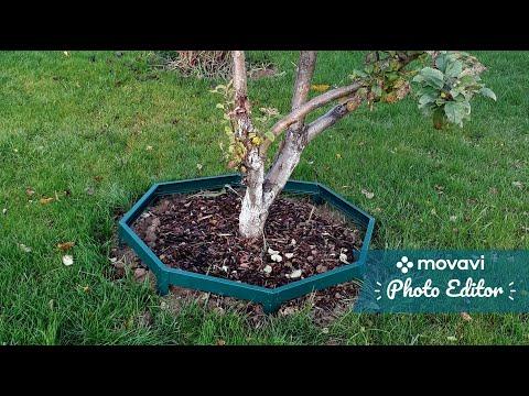 Сад и огород. Приствольные круги плодовых деревьев как делать не надо. Уход за садом.