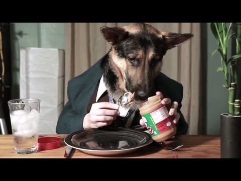 Dog Eating Peanut Butter Youtube