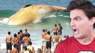 O maior MISTÉRIO do OCEANO!