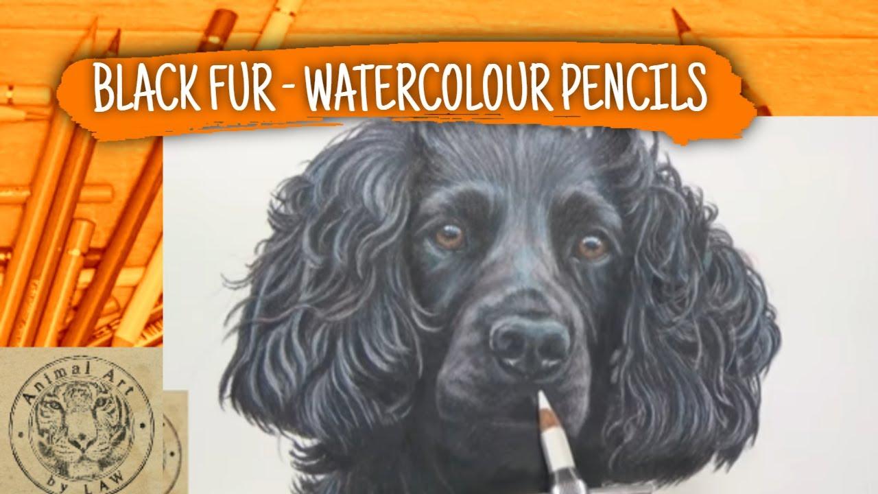 How To Draw Black Fur Using Watercolour Pencils  Dog Portrait  Faber  Castell Albrecht Durer