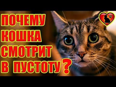 Вопрос: Почему кошка вечером начинает беситься?
