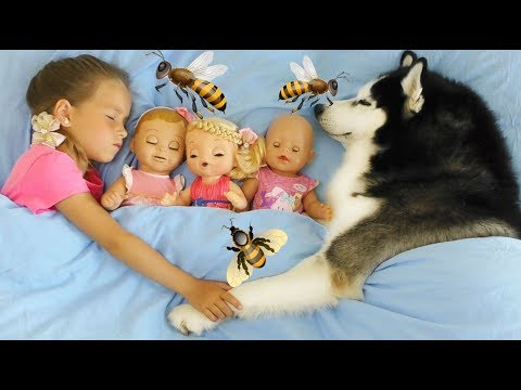 София и сборник новых серий про Собаку и Любимые Игрушки