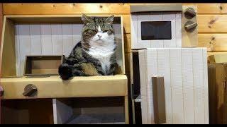 キッチンの収納力を確かめるねこ。-Maru checks the storage capacity of the kitchen.-