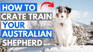 How to Crate Train your Australian Shepherd (In 6 Steps)