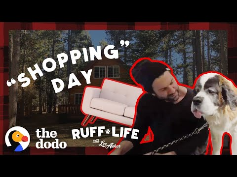 What Happens When You Take 9 Dogs Furniture Shopping? | Ruff Life With Lee Asher