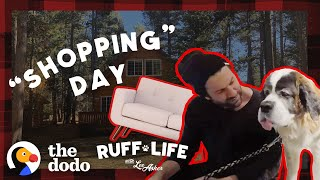 What Happens When You Take 9 Dogs Furniture Shopping? | Ruff Life With Lee Asher thumbnail