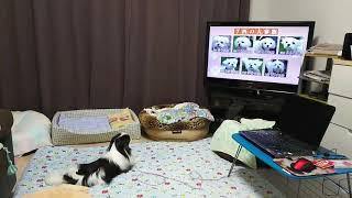 ただただテレビを楽しむ  長いこと観てた.