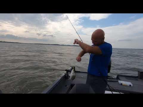 Milford Lake White Bass And Wiper 150+ Smash Kansas Fishing