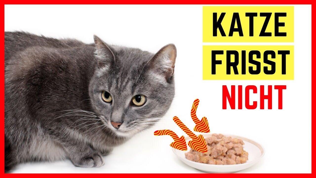 Katze frisst nicht mehr - Ursachen, Bedeutung und Tipps