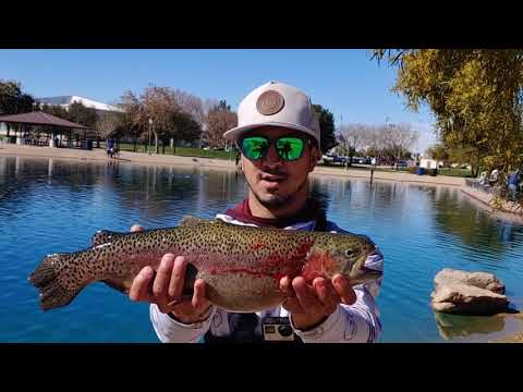 Urban  Trout   Fishing   AZ  Pt3 | Catch & Cook