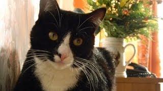 Жизнь и взросление кошки, хроника из жизни котэ.