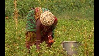 """""""Holva Tribes"""" A Documentary Movie"""