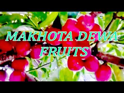 Download MAKHOTA DEWA FRUITS