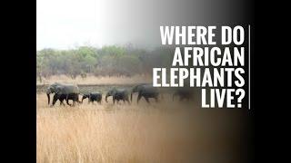 Where do african elephants live?