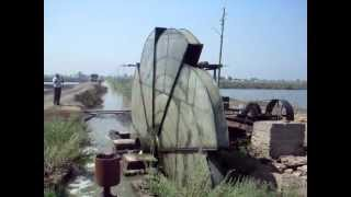 Use of traditional water wheels in lifting water to fish farms in Egypt
