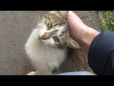 Kitten with cute eyes on the street