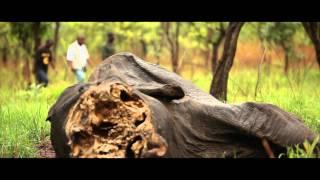 Masakra słoni w Kamerunie