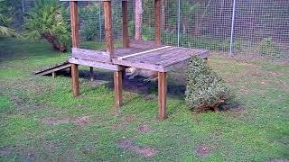 Nikita the Lioness Cam 01-10-2018 10:34:37 - 11:34:38 thumbnail