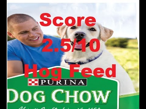 Purina Dog Chow Complete Dog Food Review