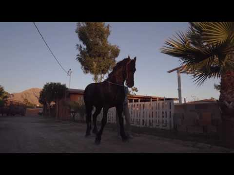 Almanza Friesian's Ranch 4k