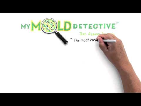 Do It Yourself Mold Testing Kit How do you find out if you have
