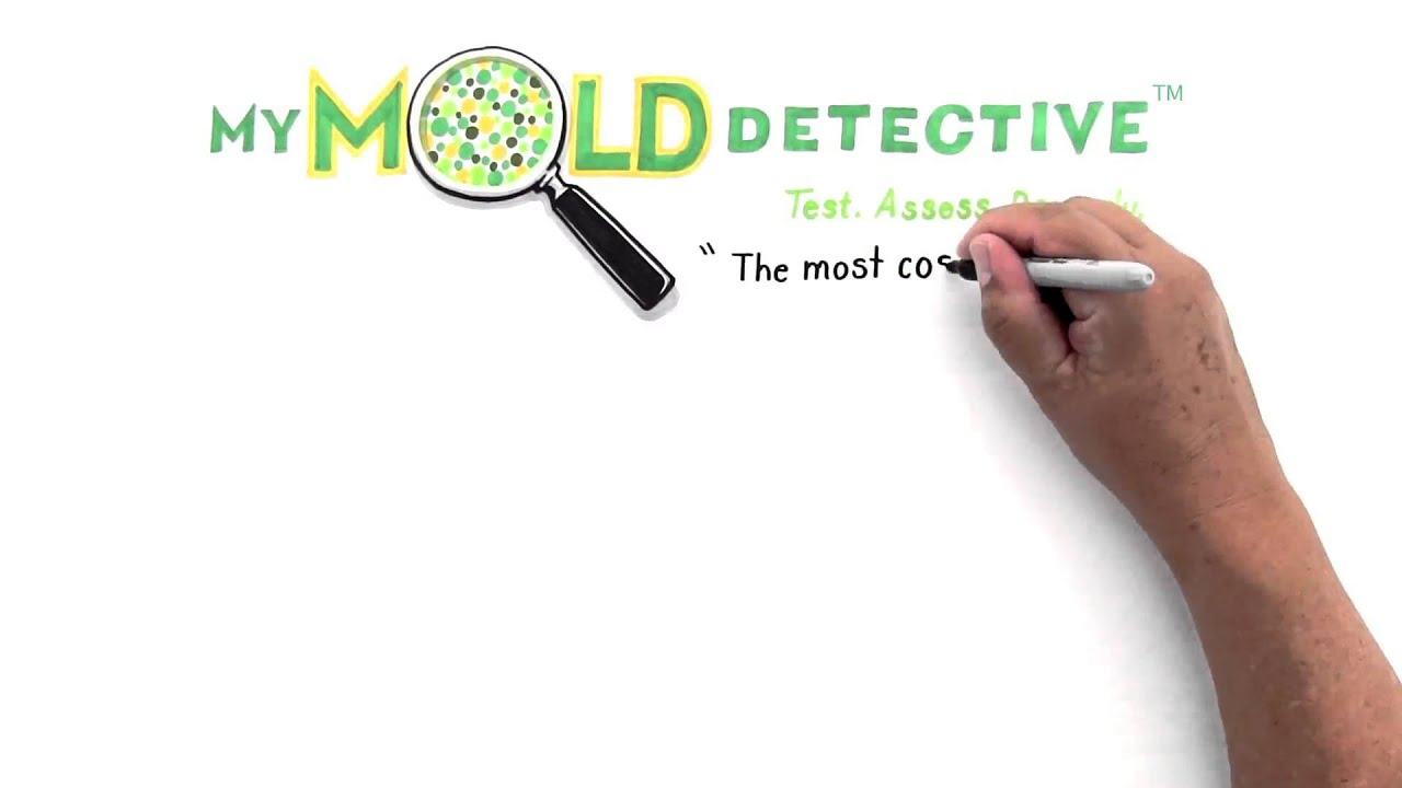 Do It Yourself Mold Testing Kit How You Find Out If Have