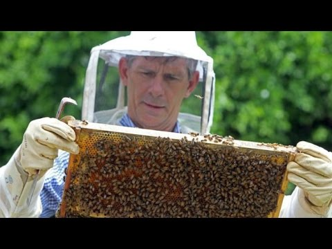 Pesticide Company Says Massive Beehive Loss is No Big Deal