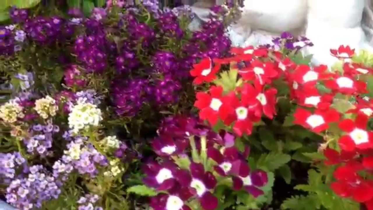 Vivero vida en tijuana hermosas flores youtube for Plantas de vivero